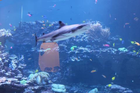 Naturkundemuseum Karlsruhe Hai