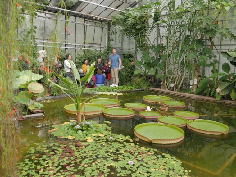 Kit Botanischer Garten